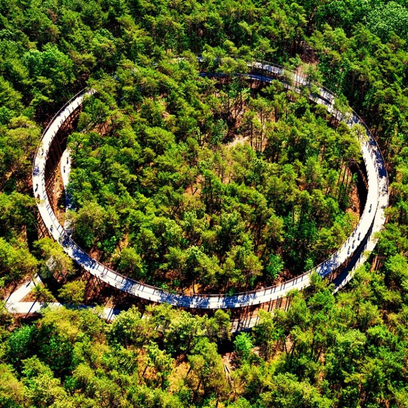 The design refers to a velodrome and the annual rings of a tree